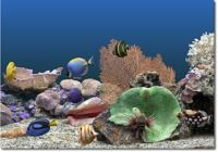 Télécharger Marine Aquarium 3 Windows